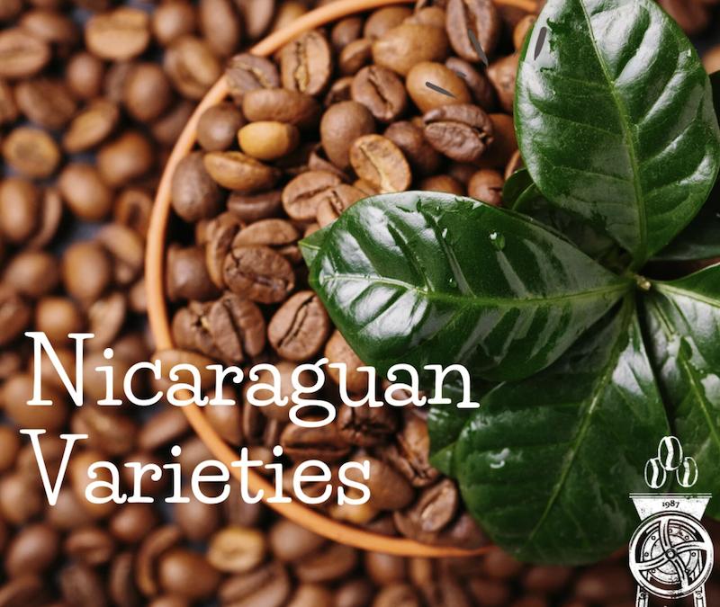 Different Varieties of Coffee Types Grown in Nicaragua